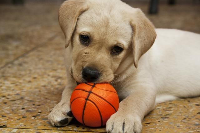 【夢占い】犬の夢を見たときの暗示・意味とは?