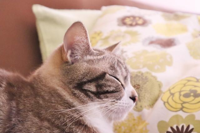 【夢占い】猫の夢を見たときの暗示・意味とは?