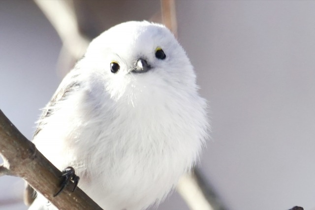 【夢占い】鳥の夢を見たときの暗示・意味とは?