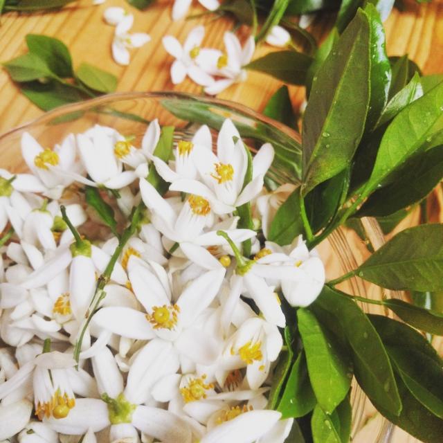 人気の香り!おすすめの人気アロマオイル12選とアロマの活用法!
