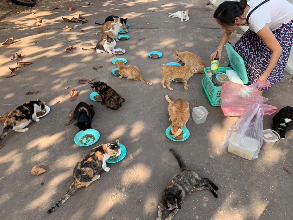 ラオスで捨て猫の保護活動を続ける日本人女性。彼女の原動力とは?