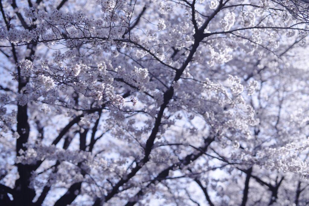春なのに憂鬱なあなたへ。自分を見つめ直し、穏やかな日々を過ごそう!