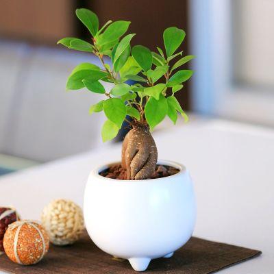 お部屋に緑をプラス♪インテリアとしての観葉植物の選び方・置き方