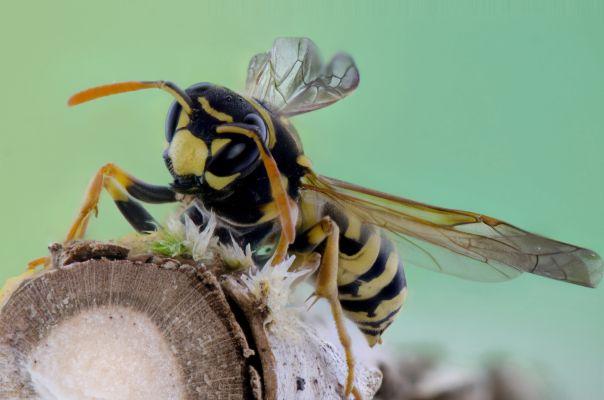 【夢占い】夢の中に蜂が出てきたときの暗示・意味とは?