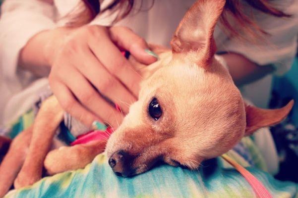 【愛犬にもアロマテラピー】ペットにオススメのアロマオイルや注意点とは