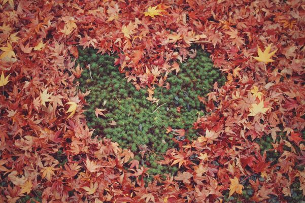 【食事/紅葉】秋限定のイベントも!恋する秋にぴったりのオススメのデートスポット15選