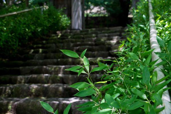 【夢占い】夢の中に階段が出てきたときの暗示・意味とは?